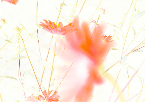 2020-04-26 « Trace fugace », peinture numérique, 30 x 21 cm ©sylvie lander