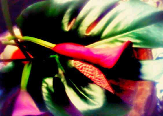 Sylvie Lander_fenêtres sur vue_2015_11_09