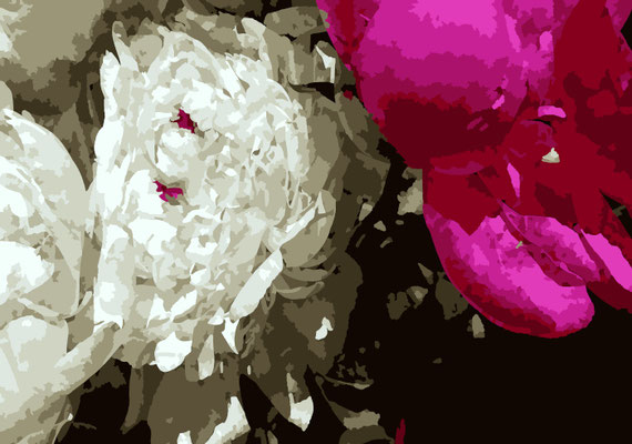 2020-03-27 « Pivoines », peinture numérique, 30 x 21 cm ©sylvie lander