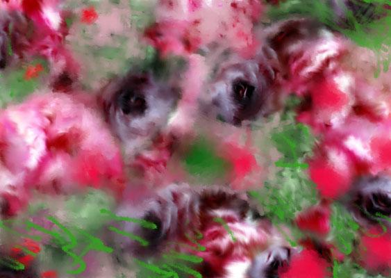 Sylvie Lander_fenêtres sur vue_2015_12_16