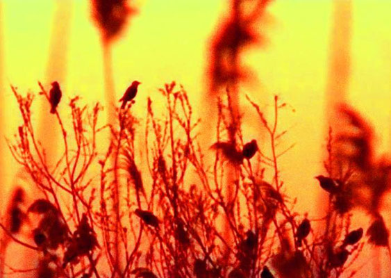 Sylvie Lander_fenêtres sur vue_2015_03_27-peinture digitale