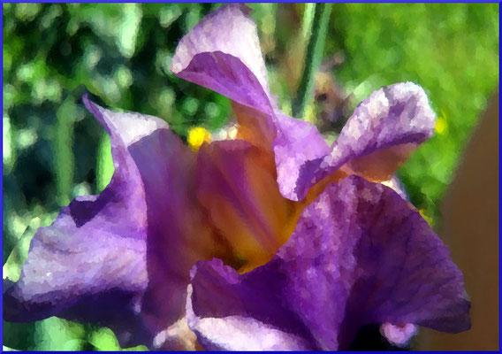 2020-05-02 « Iris », peinture numérique, 30 x 21 cm ©sylvie lander