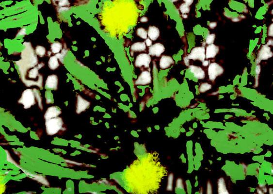 Sylvie Lander_fenêtres sur vue_2015_05_01
