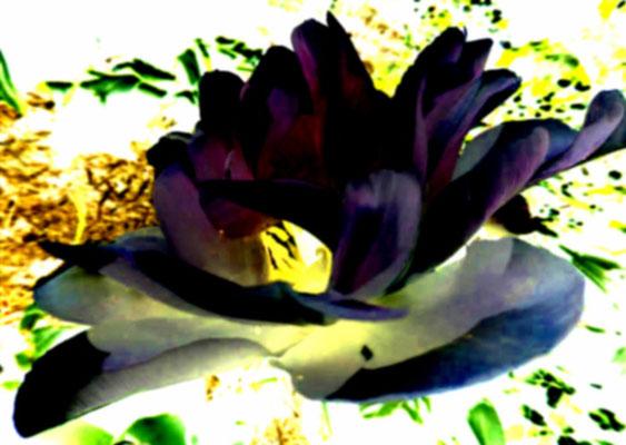 Sylvie Lander_fenêtres sur vue_2015_06_28