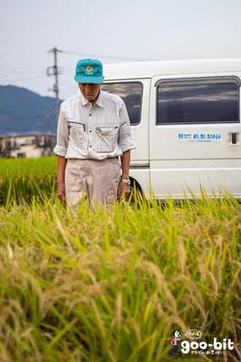 酒米「若水」栽培農家の加藤欣三さん。田んぼを見回りしています。(南足柄市)