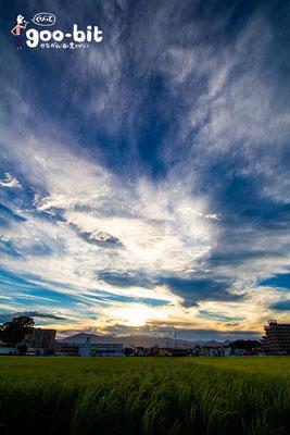 泉橋酒造さんの田んぼから見た大山方面の風景。夕日が沈んでいきます。(海老名市)
