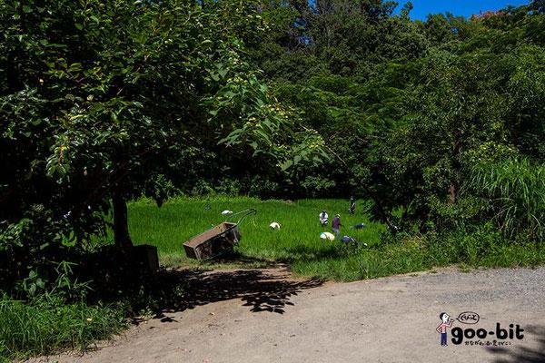 ある農園の農作業風景。なぜかちょっと「昔のヨーロッパ」を感じました(笑)。(横浜市)