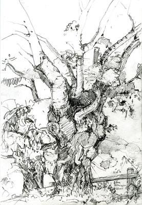 Plaqué-grillé, 2019, dessin à la mine de plomb sur papier 180g: freine et chataignier échaudés par les canicules, St Céneri (Normandie), 21x30cm.