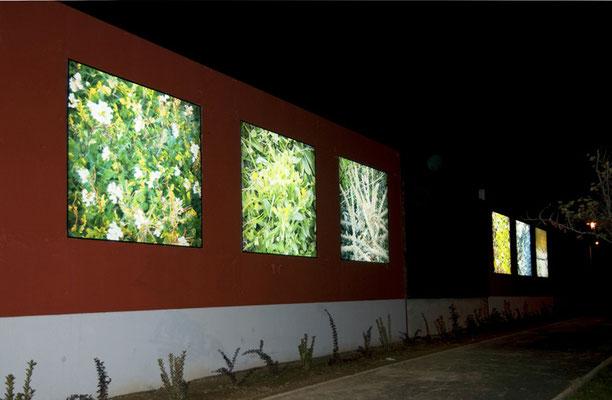 """Vue extérieure 2010: photos des espèces végétales du """"Tiers-paysage"""" vendrois prises au ras du sol et verticalement pour une intégration en tableau cohérente."""