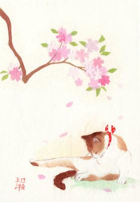 和風イラスト・猫