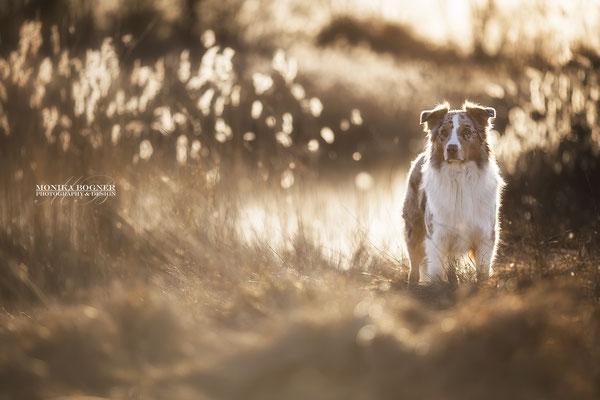 Fotoshooting im Winter mit Hund