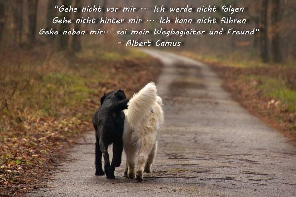 Hunde Zitate Zum Nachdenken Sprüche Und Zitate Hunde 2019