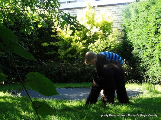 Kind mit Assistenzhund Königspudel im Garten