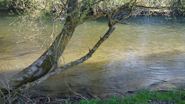 Für einen Urgesteinsfluss ungewöhnlich klares Wasser