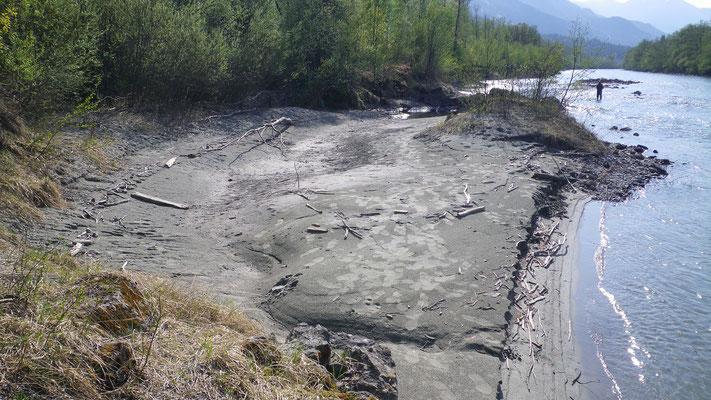 Abwechslungsreiche Ufer die sich die Drau immer neu gestaltet