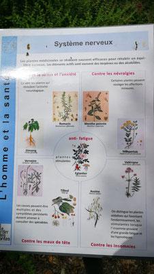 Des plantes qui soignent