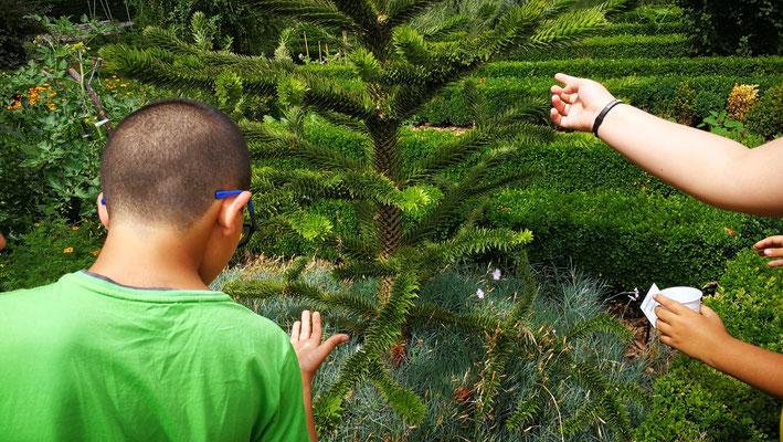 Apprendre à reconnaître les plantes