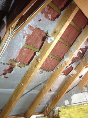 Bild 3 von 5 Marder im Haus | Schäden und gestörte Nachtruhe vermeiden mit dem Marder- & Waschbären-Stopp