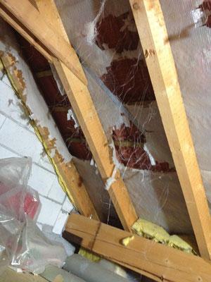 Bild 1 von 5 Marder im Haus | Schäden und gestörte Nachtruhe vermeiden mit dem Marder- & Waschbären-Stopp