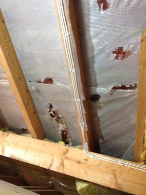 Bild 5 von 5 Marder im Haus | Schäden und gestörte Nachtruhe vermeiden mit dem Marder- & Waschbären-Stopp