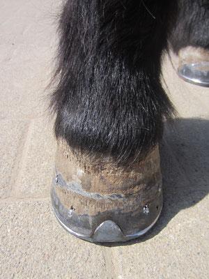 Ponyhuf mit Zehenkappe