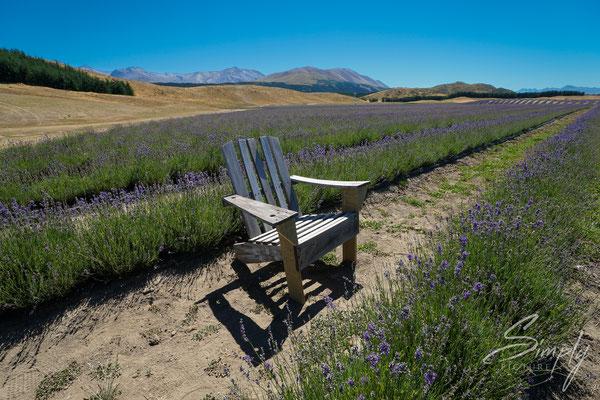 Bio Lavendelfeld mit Holzstuhl