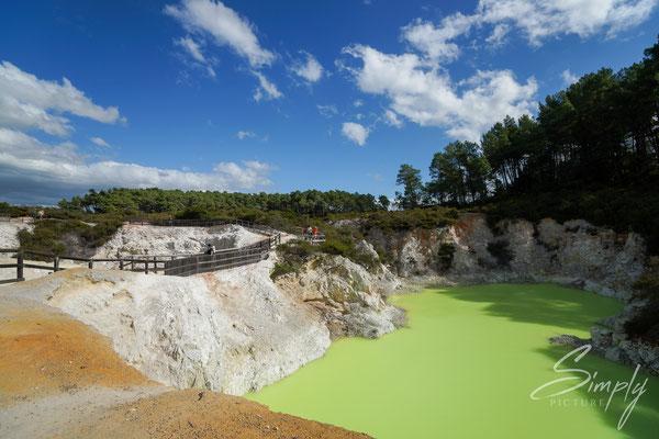 Rotorua, Wai-O-Tapu, leuchtend gelb-grüner Vulkansee