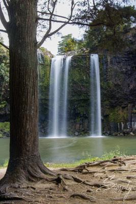 Whangarei Falls, Wasserfall mit grossem Baum im Vordergrund, Langzeitaufnahme