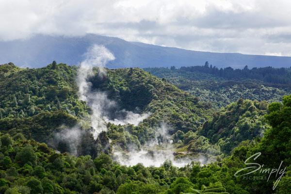 Rotorua, Waimangu Valley, vulkanischer Dampf über dem Subtrobischen Urwald