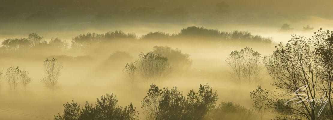 Helensville, Sonnenaufgang mit feinem Hebel und gelb goldigem Licht