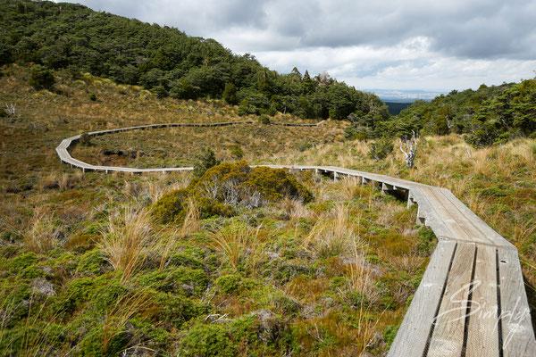 Tongariro National Park-Holzweg führt über eine Anhöhe im Nationalpark