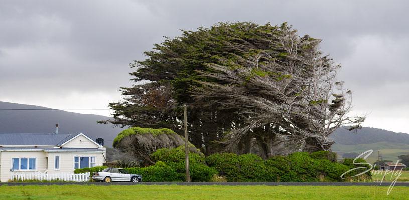 Colac Bay, Oraka, Haus mit grossem Baum, welcher vom Wind stark verbogen und geschunden ist