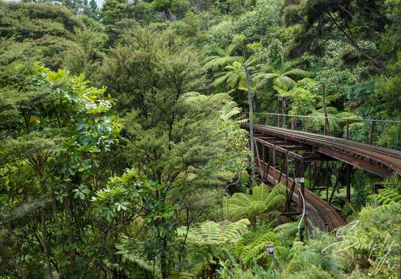 Coromandel, Driving Creek Railway, grüner subtrobischer Jungel mit einer schmalspur Eisenbahnschiene