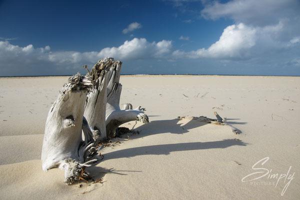 Weisser Strand mit altem weissem Baumstrunk im Sand
