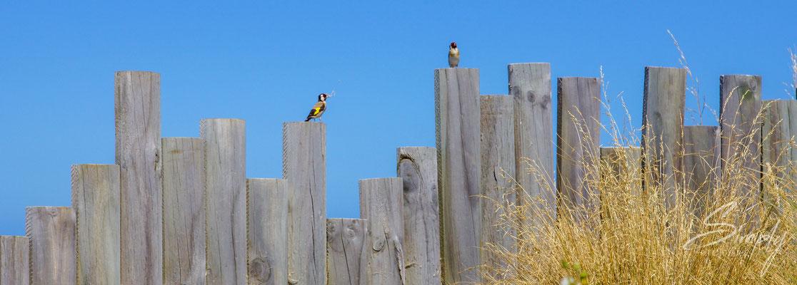 Kaikoura, Vögel auf alten Baumstämmen