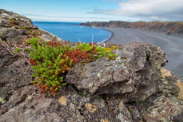 Strand mit stahlblauem Meer und nordischem Steinbewuchs.