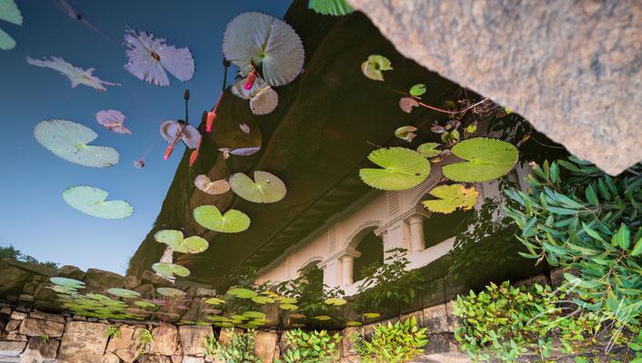 Spiegelung von teilen der Tempelanlage der Dambulla Höhlentempel