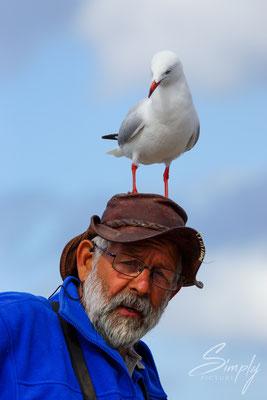 Möve auf dem Kopf eines Fischers, welcher die Pelikane fütterte auf Kangaroo Island