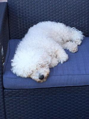 Cannelle, der Hund unserer Gastgeber