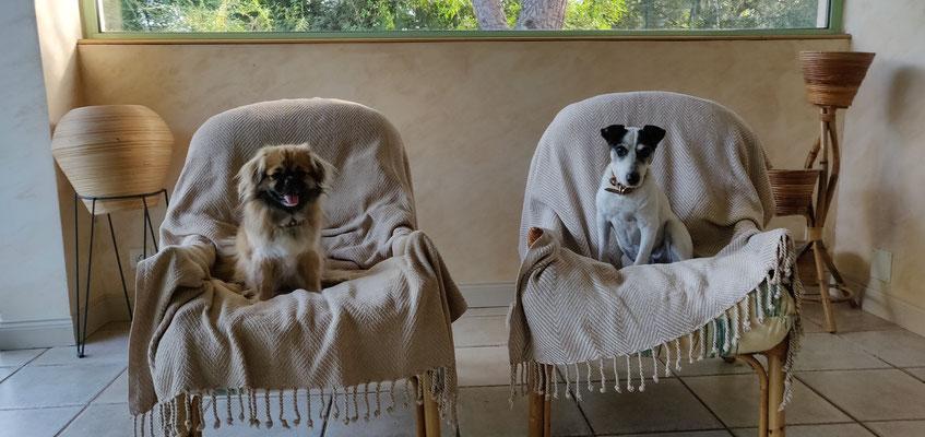 pension canine les pattes libres Pignan