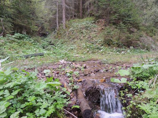 Beim Wandern durch den Wald kommt man an kleinen Bächen vorbei.