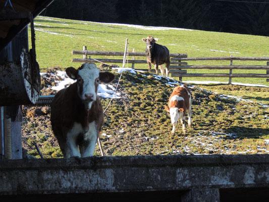 Die Jungtiere hinter dem Stall