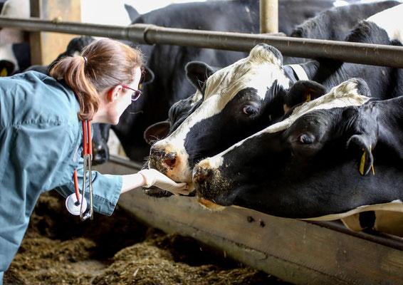 Kühe sind ja so neugierig!