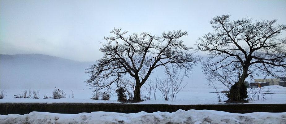 ~  冬の風物詩  ~  雪の余呉湖  (2021.1.21) (c) Yukie Arai