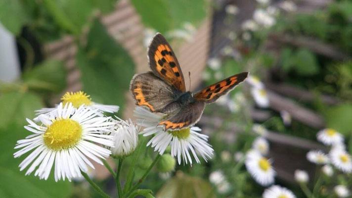 ~ 蝶と花と郵便局 ~  「おやっ?この蝶と花は もしかして・・・」と思い、あわてて写真をパチリっ♪… 3枚目で蝶はとんでいってしまった。。          (c) Yukie Arai