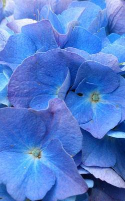 ~ blue blue blue ~  時の うつろい は  色の うつろい …☆ (2015.6.26) (c) Yukie Arai
