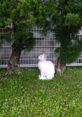 ~  Between the trees  ~  look up~♪    (2021.6.12) (c) Yukie Arai