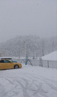 ~  信号機色  ~   雪のなか 赤をひそかに待っている♪   (2019.1.26) (c) Yukie Arai