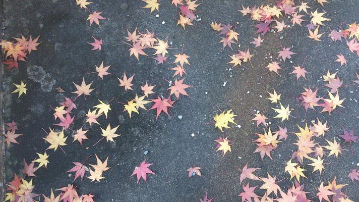~  流星群  ~ 今夜、ふたご座流星群が見頃ですょ♪  When You Wish Upon a Star ~☆...(2015.12.14) (c) Yukie Arai