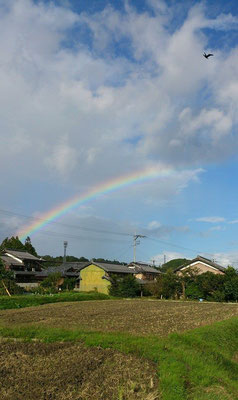 ~ 7 colors ~  いいこと ありそ♪な気がした (2014.10.27) (c) Yukie Arai